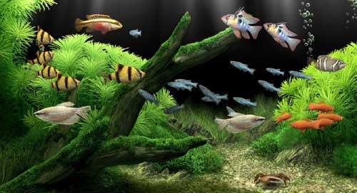 Lựa chọn nhà cung cấp bể cá cảnh