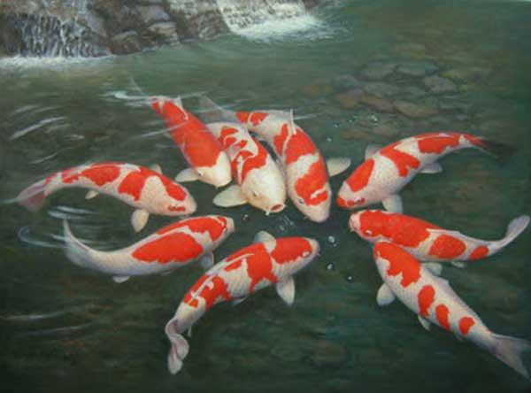 đặc điểm sinh học cá chép nhật