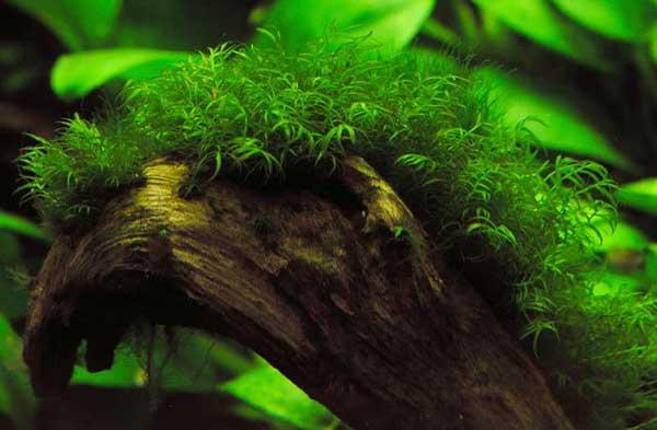 cây trong bể thủy sinh
