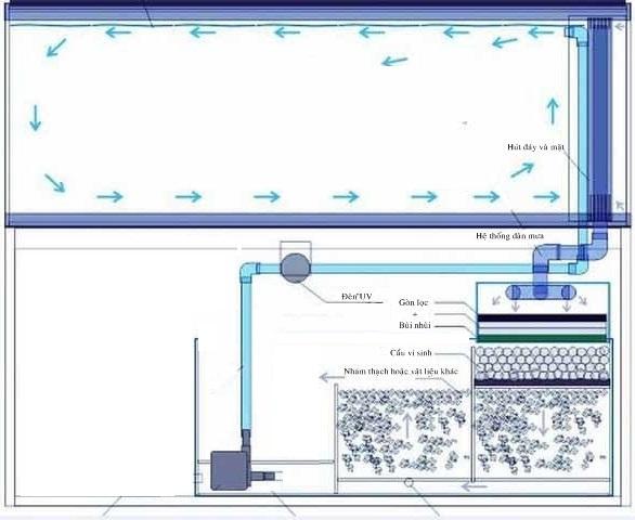 Hệ thống lọc của bể cá Rồng