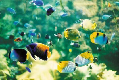 môi trường nước cho cá cảnh