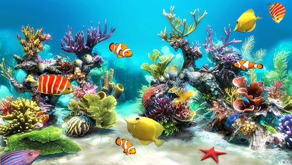 Chăm sóc và bảo dưỡng bể cá cảnh biển