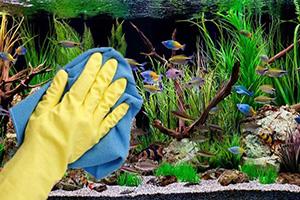 Dịch vụ chăm sóc và bảo dưỡng bể cá cảnh AquaZone