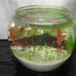 Hướng dẫn làm bể thủy sinh mini