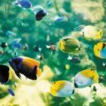 Môi trường nước với đặc tính của cá cảnh