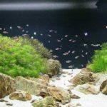 Chất lượng nước máy để nuôi cá cảnh