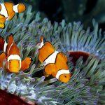 Kỹ thuật nuôi cá cảnh biển