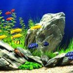Ảnh hưởng của pH đến sinh sản cá cảnh