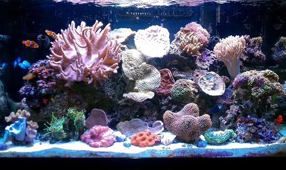 Bể cá cảnh biển đẹp