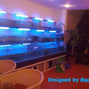 Dàn bể nuôi thủy hải sản