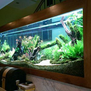 Bể thủy sinh tự nhiên đẹp