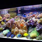 Những yếu tố cơ bản để duy trì một bể san hô