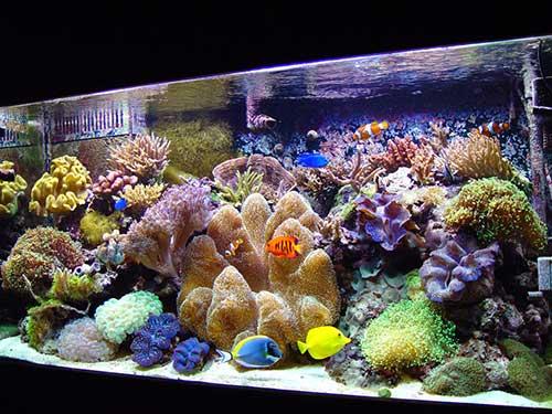 Bể cá cảnh biển