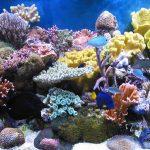 Ảnh hưởng của ánh sáng đến màu sắc của san hô trong bể cá cảnh