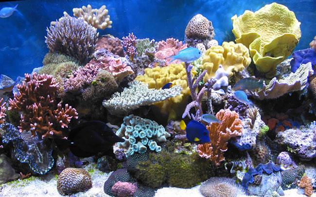 San hô trong bể cá cảnh biển
